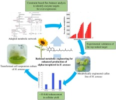 Rational metabolic engineering for enhanced alpha-tocopherol production in Helianthus annuus cell culture